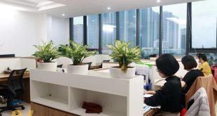 thiết kế thi công văn phòng 50m2